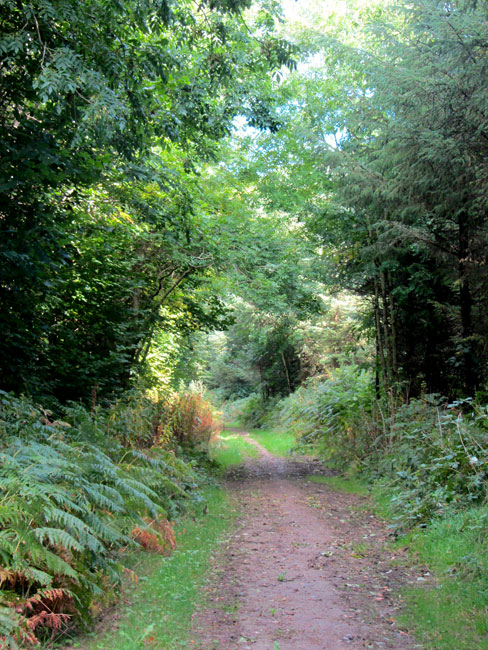 Trail On Ballagh Loop Walk