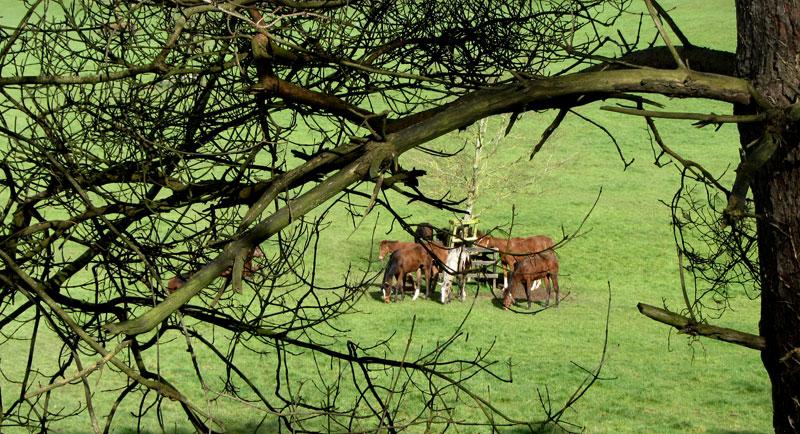 Horses at Knockatrina Durrow