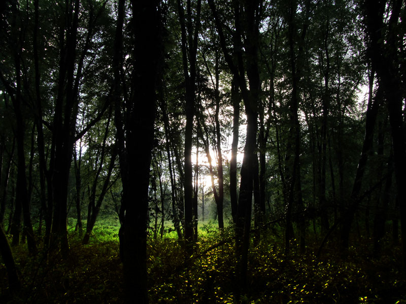 Sunset at Dunmore Wood Durrow
