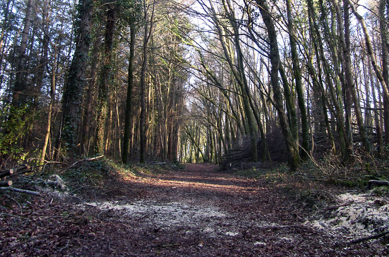 Quick Loop Walk, Dunmore Wood, Durrow.