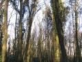 Quick Loop Walk, Dunmore Wood, Durrow.