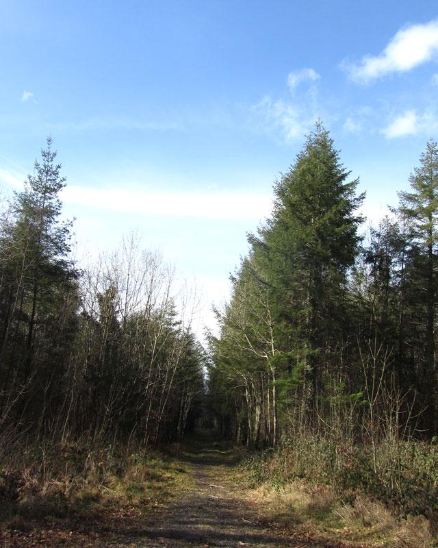 Dunmore Wood Durrow