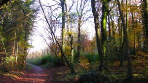 Walkway At Dunmore Wood