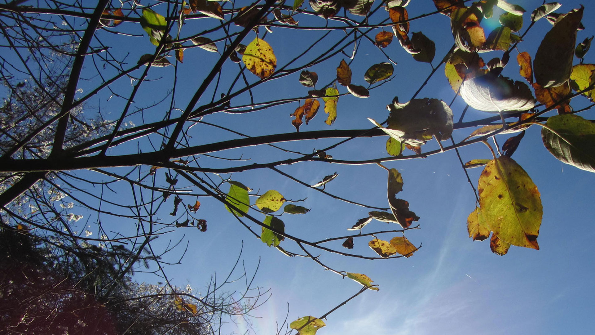 Durrow Woodland Walks – Ever Changing Colours.
