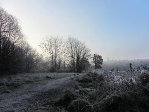 Morning frost, Dunmore Wood, Durrow.