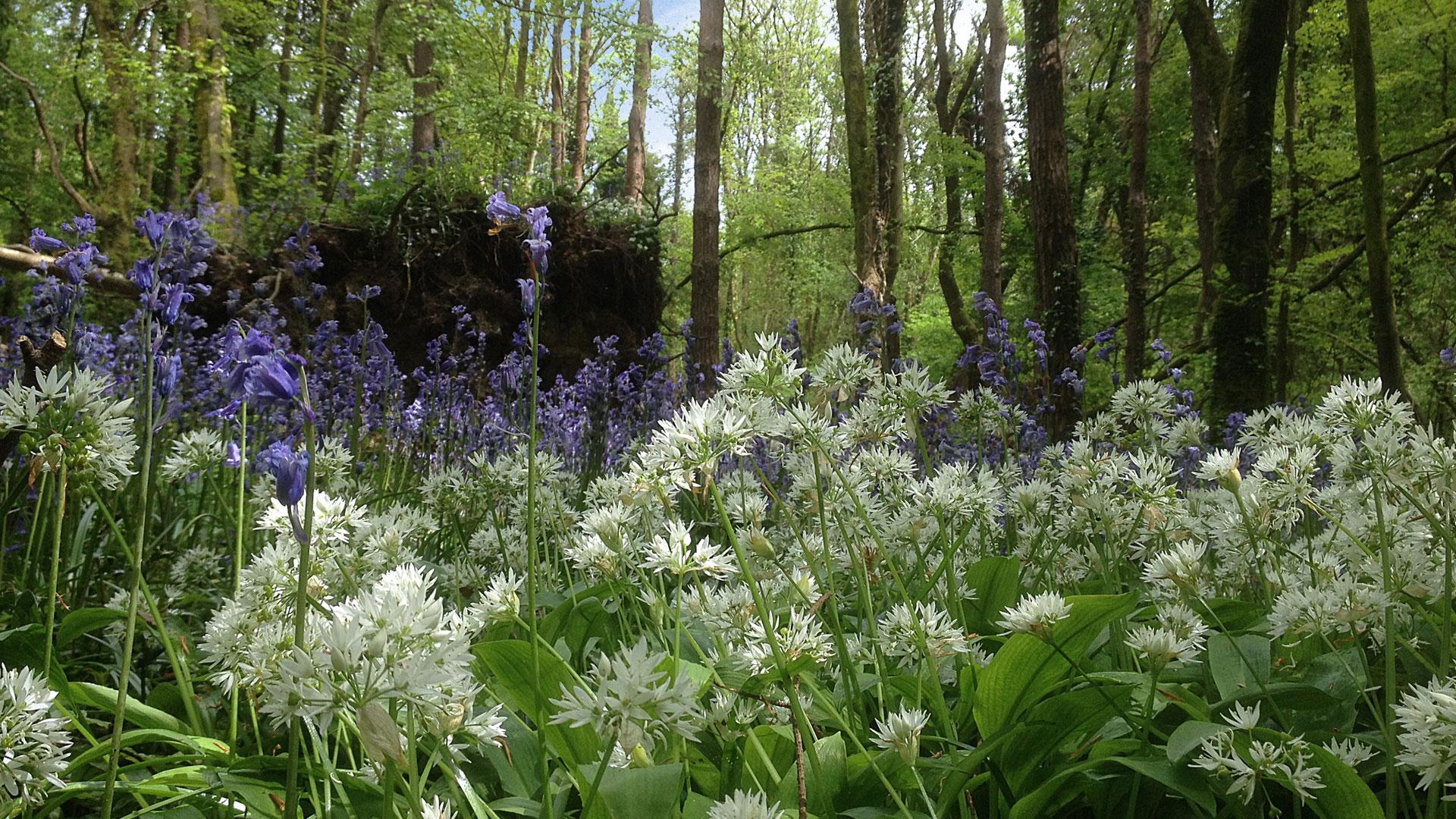 Knockatrina Wood – Photo Gallery.