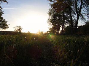 Knockatrina Wood, Durrow.