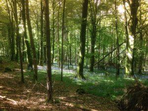 Knockatrina Wood, Durrow