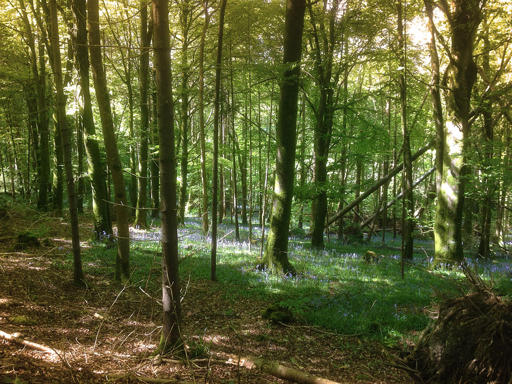 Knockatrina Wood, Durrow