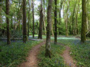 Pathway at Knockatrina Wood