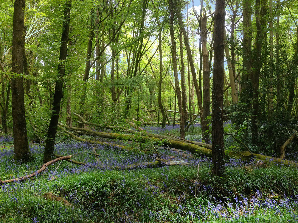 Fallen Trees at Knockatrina Wood