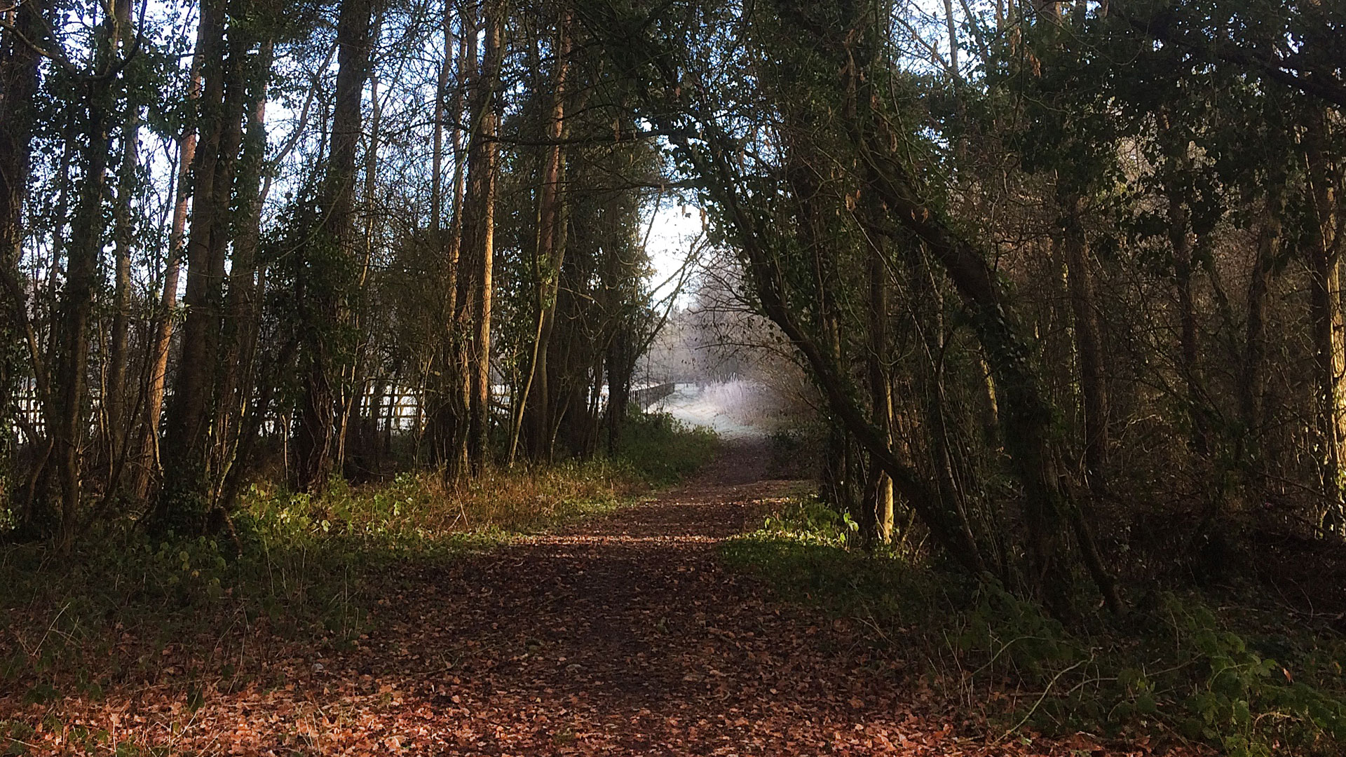 A Frosty Morning on the Leafy Loop.