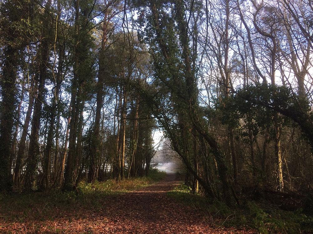 Knockatrina Wood.