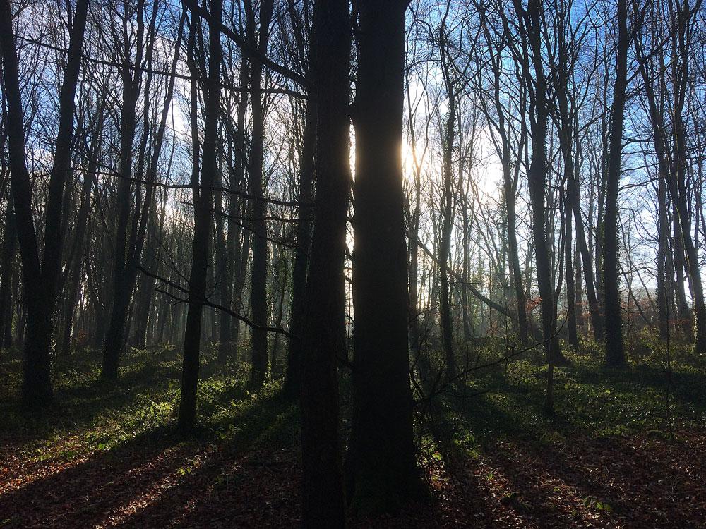 Knockatrina Wood - Early Morning Sun.