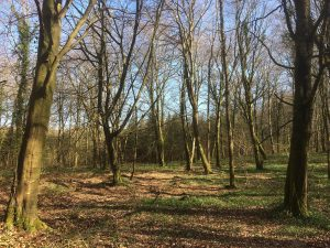 Caponnellan Wood