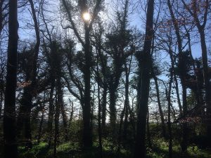 Caponnellan Wood Durrow