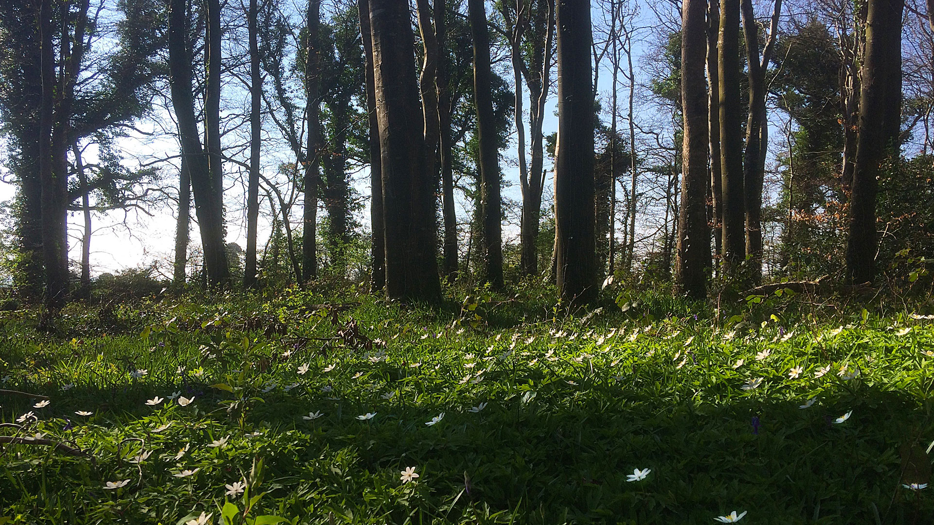 Capponellan Wood Durrow – April 8th 2017
