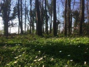 Caponnellan Wood Durrow