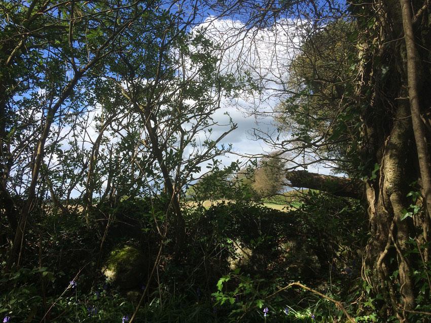 Capponellan Wood, Durrow - April 26th 2017.