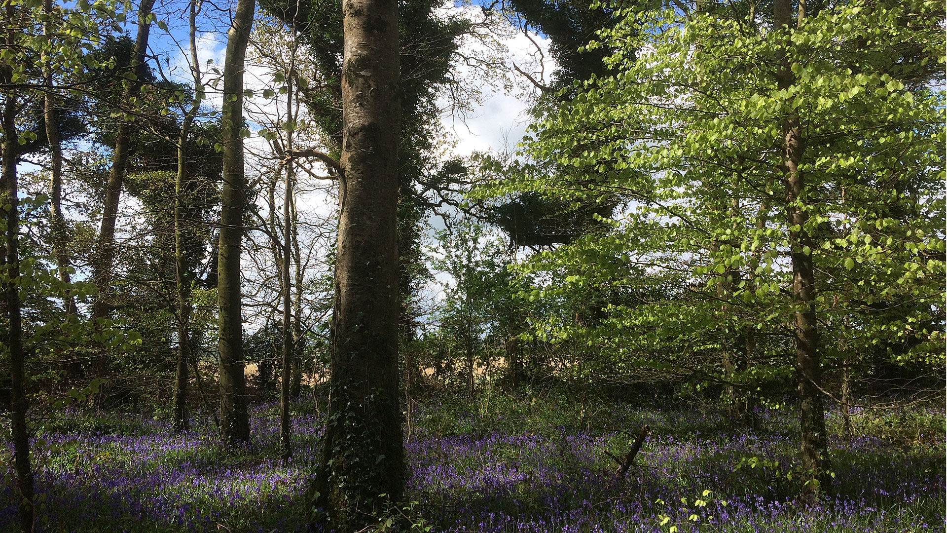 Capponellan Wood, Durrow – April 26th 2017, Gallery 2.