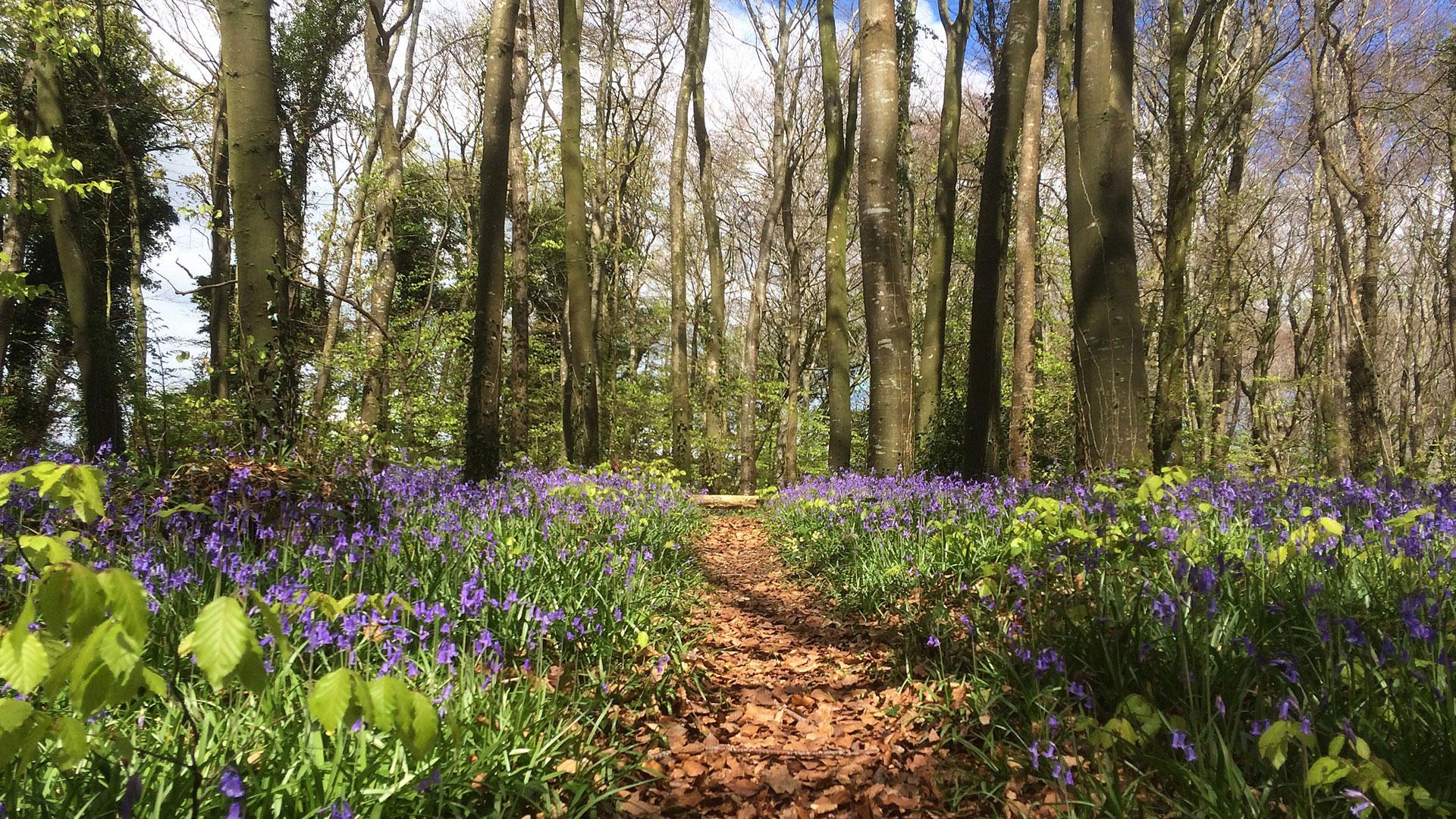 Capponellan Wood, Durrow – April 26th 2017.
