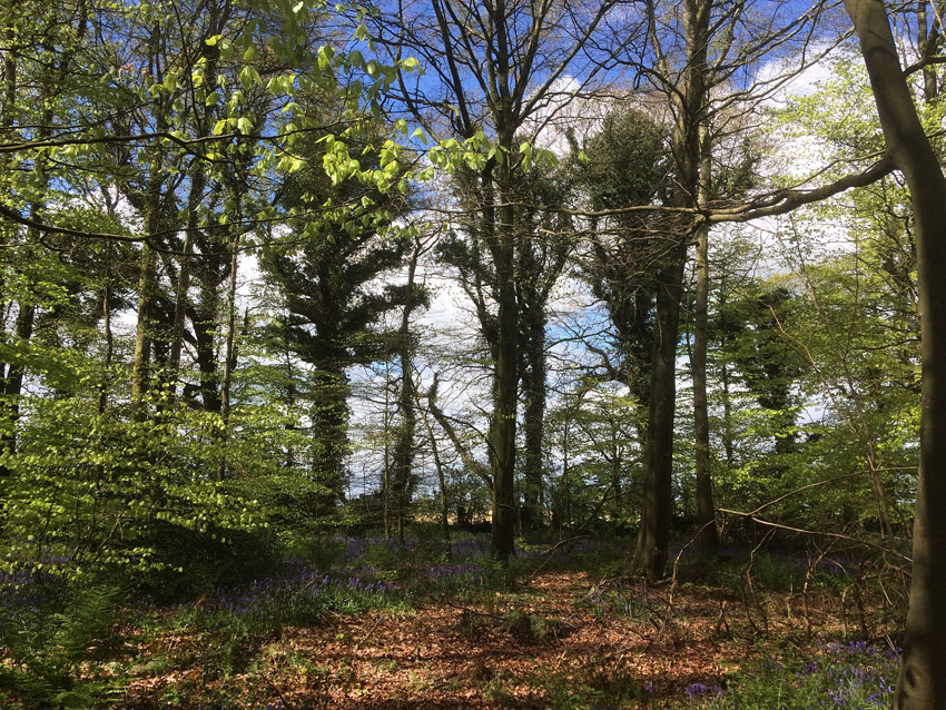 Capponellan Wood, Durrow - April 26th 2017.