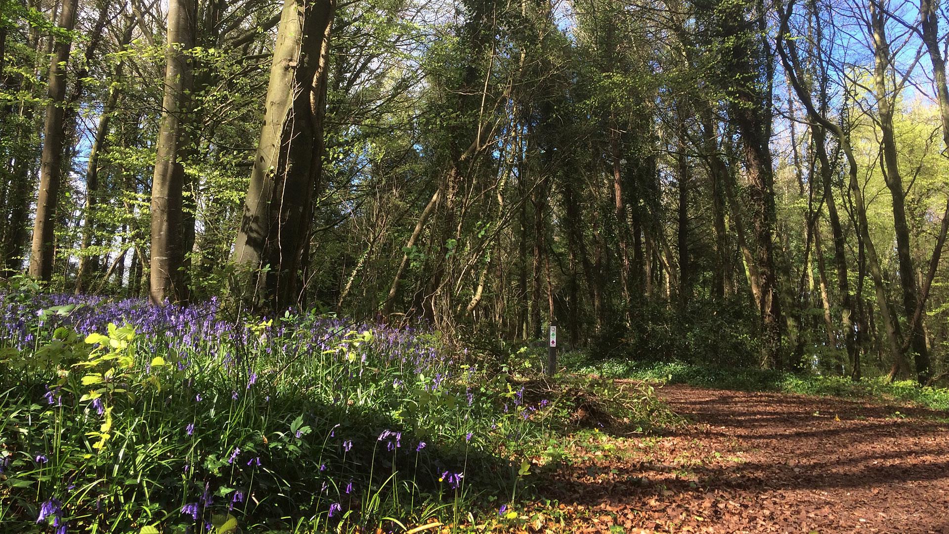 Family Bluebell Walk – Knockatrina Wood – Friday 5th May