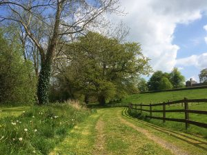 Castle Durrow Walk, Leafy Loop, Durrow, Co. Laois