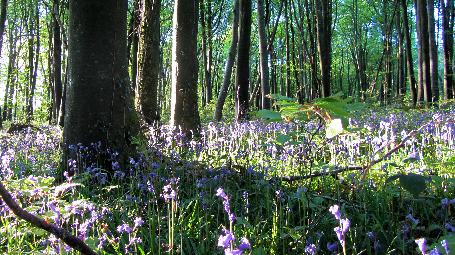 Bluebell Walk, Bug Hotel & Fairy Door Adventure
