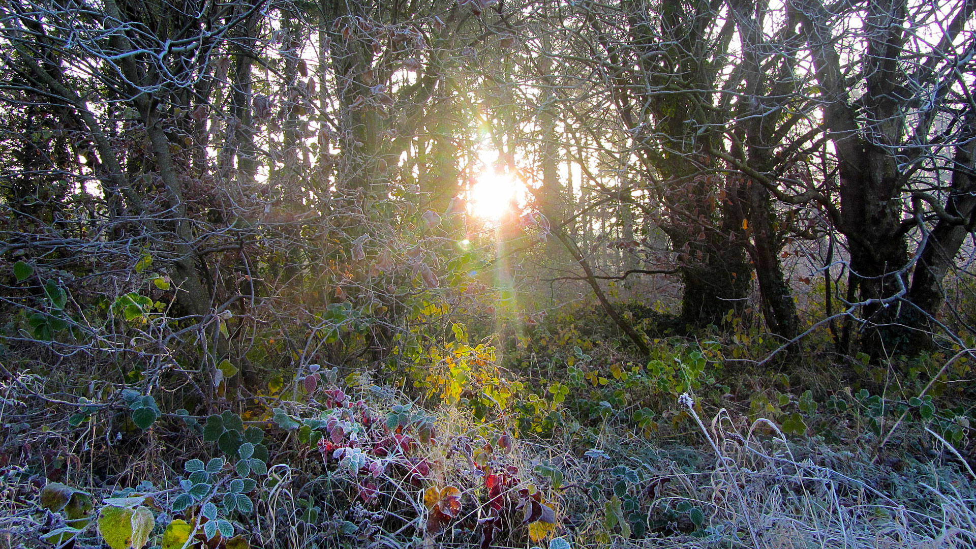Video – Dunmore Wood, Durrow, 30th November 2016