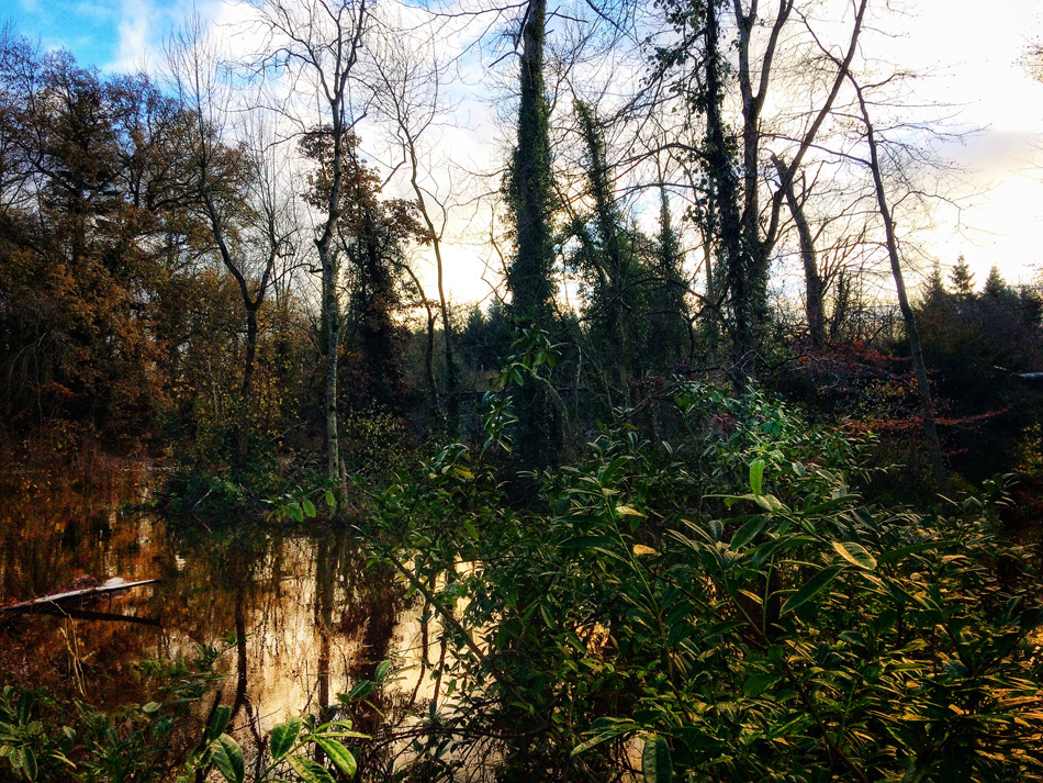 Flooding at Dunmore Wood, Durrow