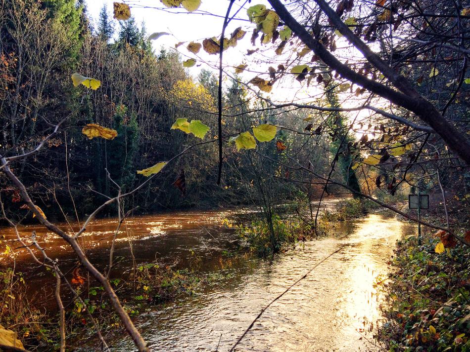 Riverbank Walkway at Dunmore Wood