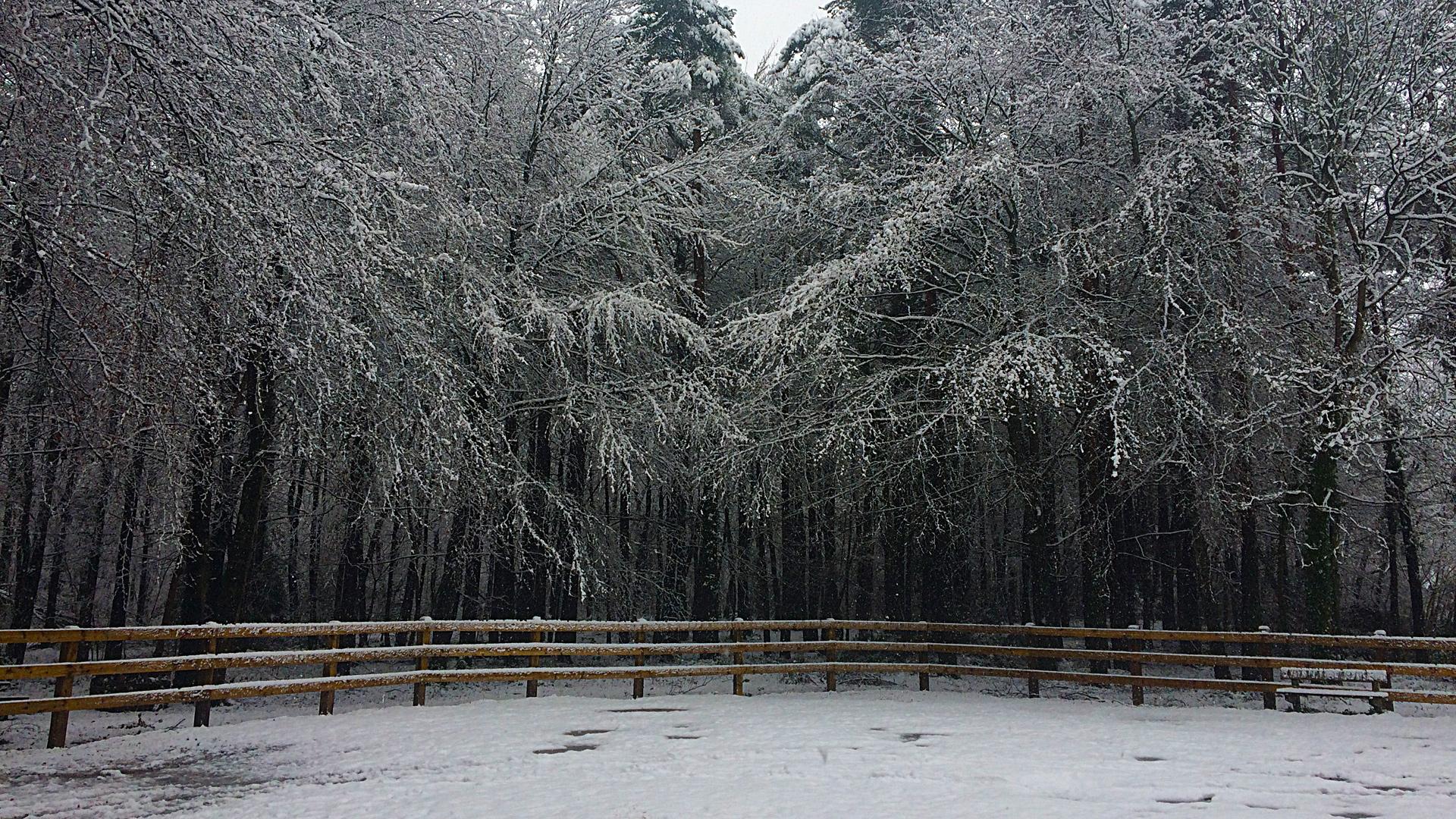 Snow On The Leafy Loop, Durrow, Co. Laois