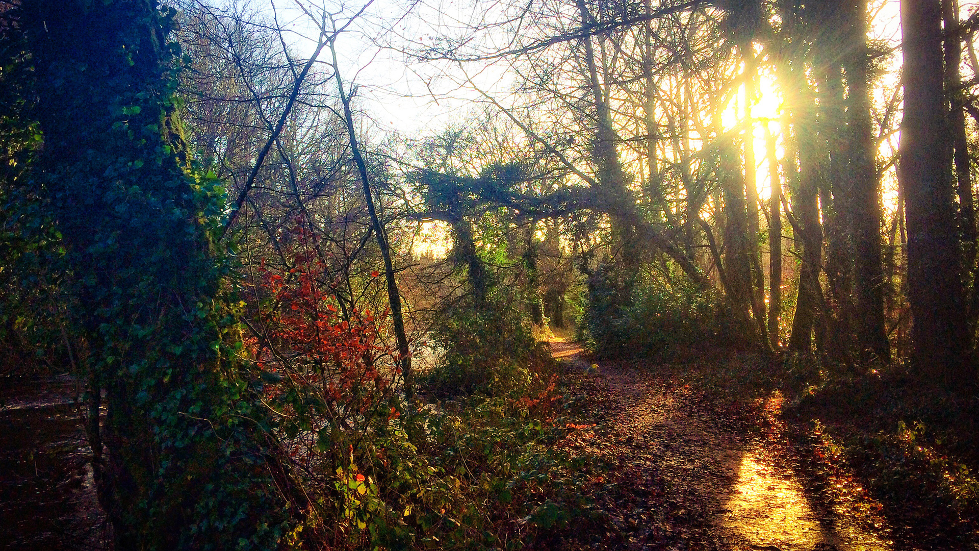 Dunmore Wood – January 6th 2018