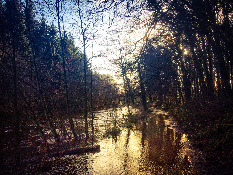 Flooded walkway at Dunmore Wood, Durrow.